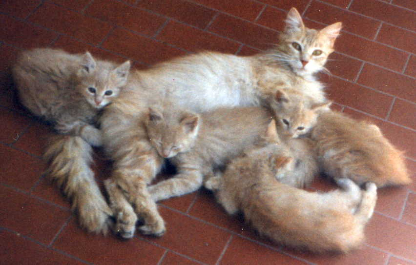 Comportamiento de perros, comportamiento de gatos, comportamiento ...
