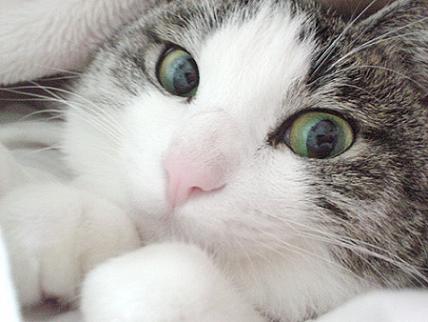 El lenguaje corporal del gato Articulo_522