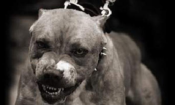 Resultado de imagen para caninos peligrosos