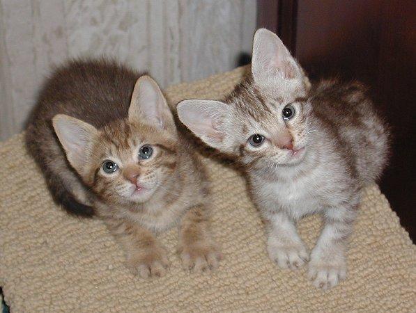 Comportamiento de perros comportamiento de gatos - Gatitos de un mes ...
