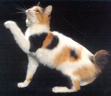 Maneki neko el gato de la suerte taringa - Cuanto dura la mala suerte ...