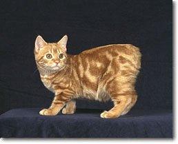 gatos cola: