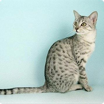 Psicología del gato (post largo y muy completo)