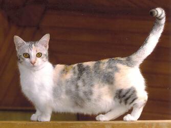 gato ruso azul bilbao: