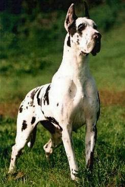 ¿Tienes un perro o quieres uno? este es tu post