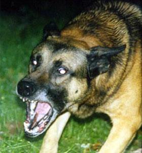 Comportamiento animal agresividad