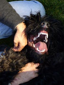 Servicios profesionales en comportamiento animal